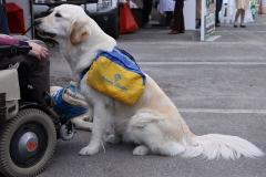 Chien assistance personne handicapées, auteur: the supermat