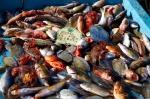 Photo Poissons sur le marché du vieux port, Marseille, auteur : smalkaa, jpg
