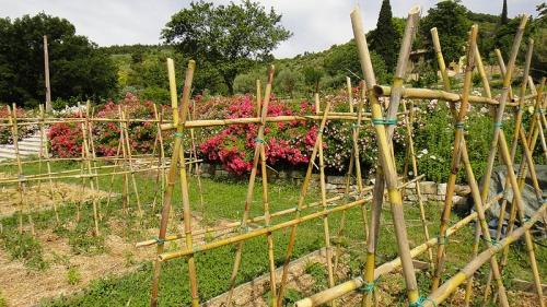 Jardin potager, JPS68